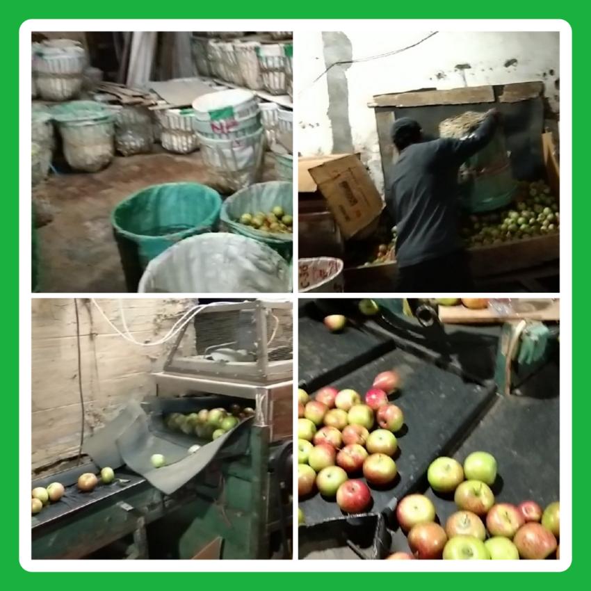gudang apel netral fruit batu