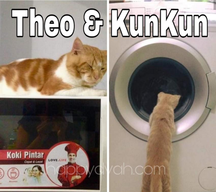 kucing rumah yang lucu