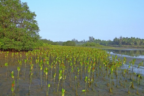 wisata mangrove jawa timur